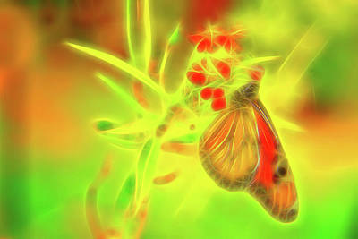 Photograph - Monarch Butterfly Abstract Sketch by Kay Brewer