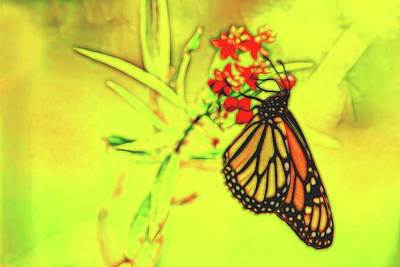 Photograph - Monarch Butterfly Abstract 5 by Kay Brewer