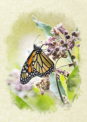 Photograph - Monarch Butterfly Blank Note Card by Christina Rollo