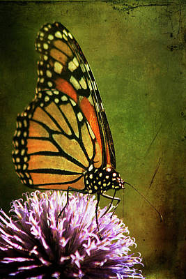 Photograph - Monarch Butterfly by Cindi Ressler