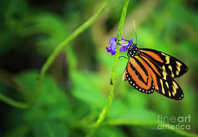 Photograph - Monarch Butterfly by Craig J Satterlee