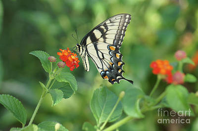 Painting - Monarch Butterfly by Debra Crank