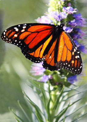 Photograph - Monarch Butterfly by Diana Haronis
