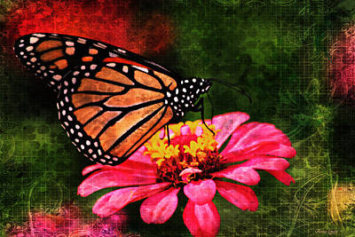 Photograph - Monarch Butterfly Dreamer by Anna Louise