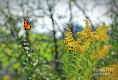 Photograph - Monarch Butterfly Flyaway by Kerri Farley