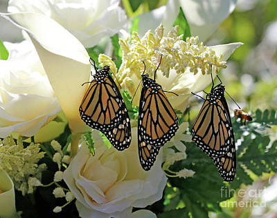 Monarch Butterfly Garden  Art Print