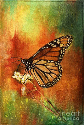 Painting - Monarch Butterfly by Christina VanGinkel