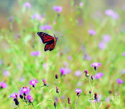 Photograph - Monarch Butterfly In Flight Over The Wildflowers by Kerri Farley
