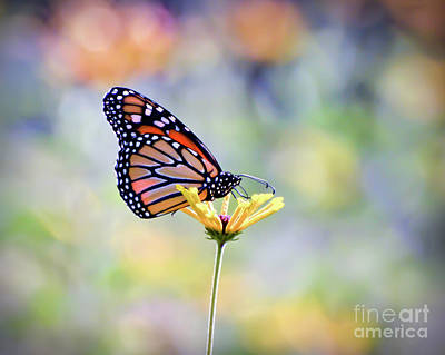 Photograph - Monarch Butterfly -  In The Garden by Kerri Farley