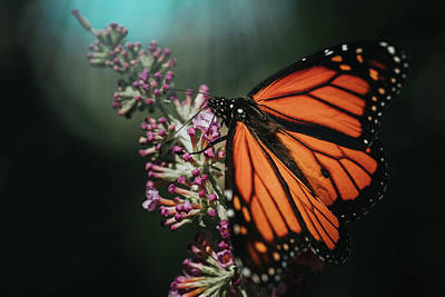 Photograph - Monarch Butterfly by Jessica Nelson