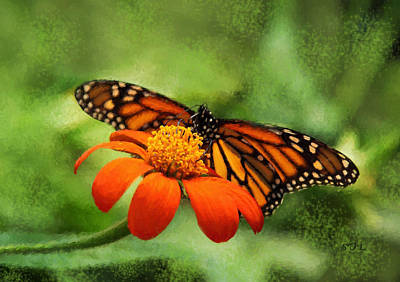 Photograph - Monarch Butterfly Landing Painted by Sandi OReilly