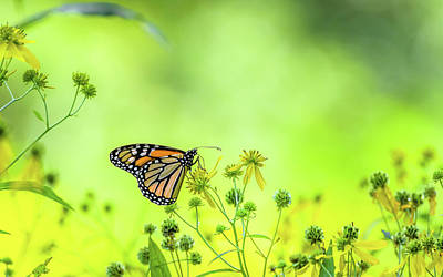 Art Print featuring the photograph Monarch Butterfly by Lori Coleman