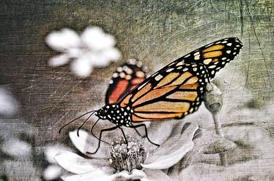 Steampunk Royalty-Free and Rights-Managed Images - Monarch Butterfly by Marianna Mills