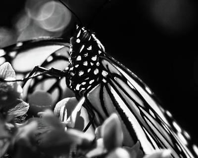 Photograph - Monarch Butterfly On Hydrangea by Jeanette Fellows