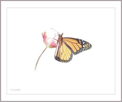 Photograph - Monarch Butterfly On Indisn Blanket Flower by A Gurmankin