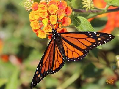 Monarch Butterfly On Orange Flower Art Print