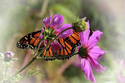 Photograph - Monarch Butterfly On The Pink Cosmos by Yumi Johnson