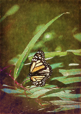 Photograph - Monarch Butterfly by Storm Smith
