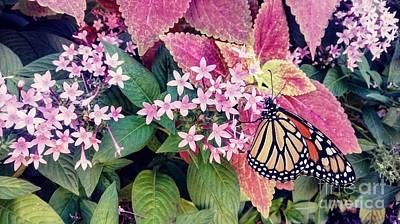 Photograph - Monarch Butterfly Garden by Patricia L Davidson