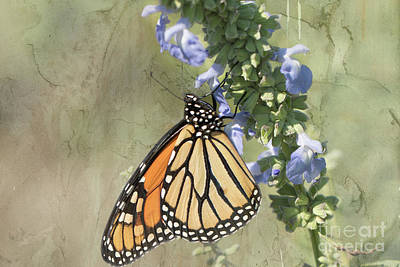 Nikki Vig Royalty-Free and Rights-Managed Images - Monarch Butterfly Textured Background by Nikki Vig