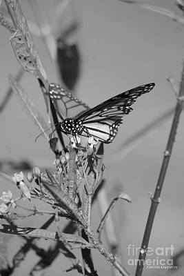 Photograph - Monarch - Bw by Tannis Baldwin