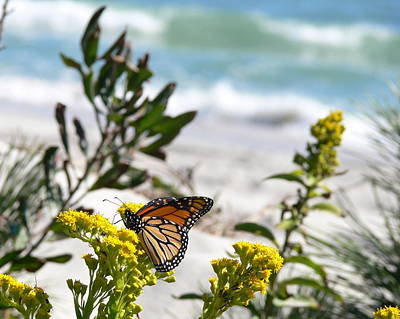 Monarch By The Sea Art Print by Tom LoPresti