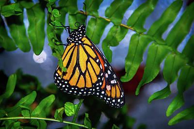 Monarch Feeding Art Print by Garry Gay