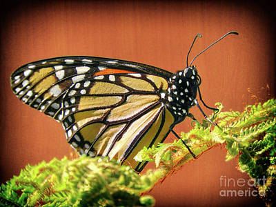 Photograph - Monarch For You by Kasia Bitner