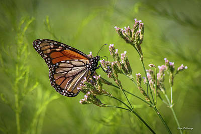 Photograph - Monarch Headed South  by Reid Callaway