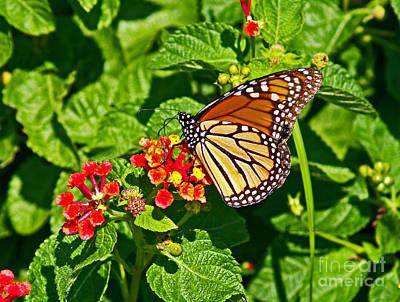 Photograph - Monarch I by Patricia Griffin Brett