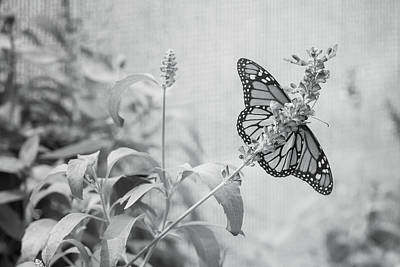 Photograph - Monarch In Black And White On Lavender by Joni Eskridge