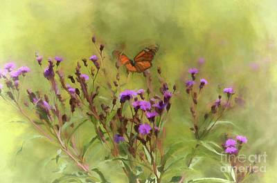 Photograph - Monarch In Ironweed by Kerri Farley