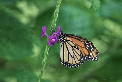 Florida Wildlife Photograph - Monarch In The Garden by Kim Hojnacki
