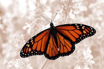 Monarch Art Print by Jeannie Burleson