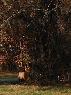 Art Print featuring the photograph Monarch Joins The Rut by Michael Dougherty