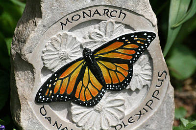 Monarch Art Print by Ken Hall