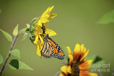 Photograph - Monarch Landscape by Cheryl Baxter