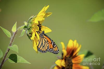 Photograph - Monarch Landscape by Cheryl Baxter