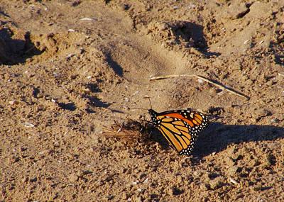 Southwick Photograph - Monarch by Lori Kingston