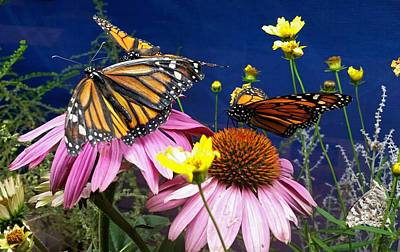Photograph - Monarch Meeting  by Ally White