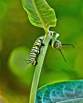 Photograph - Monarch Munchies by Ann Ranlett