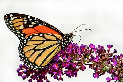 Truck Art - Monarch of the garden  by Geraldine Scull