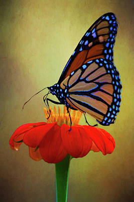 Photograph - Monarch On A Mexican Sunflower by Chris Lord