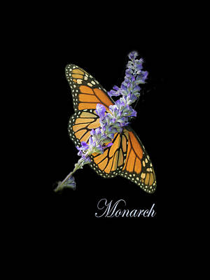 Photograph - Monarch On Black by Joni Eskridge