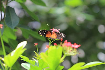 Photograph - Monarch On Flowers by Angela Murdock