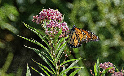 Print featuring the photograph Monarch On Milkweed by Sandy Keeton