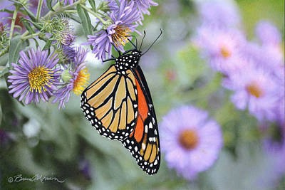 Aster Drawing - Monarch On New England Aster by Bruce Morrison