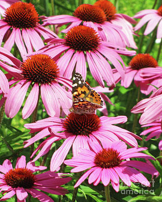 Photograph - Monarch On Pink by Randall Weidner
