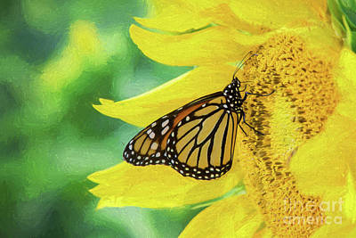 Photograph - Monarch On Sunflower by Sharon McConnell