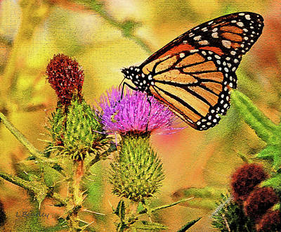 Monarch On Thistle Art Print